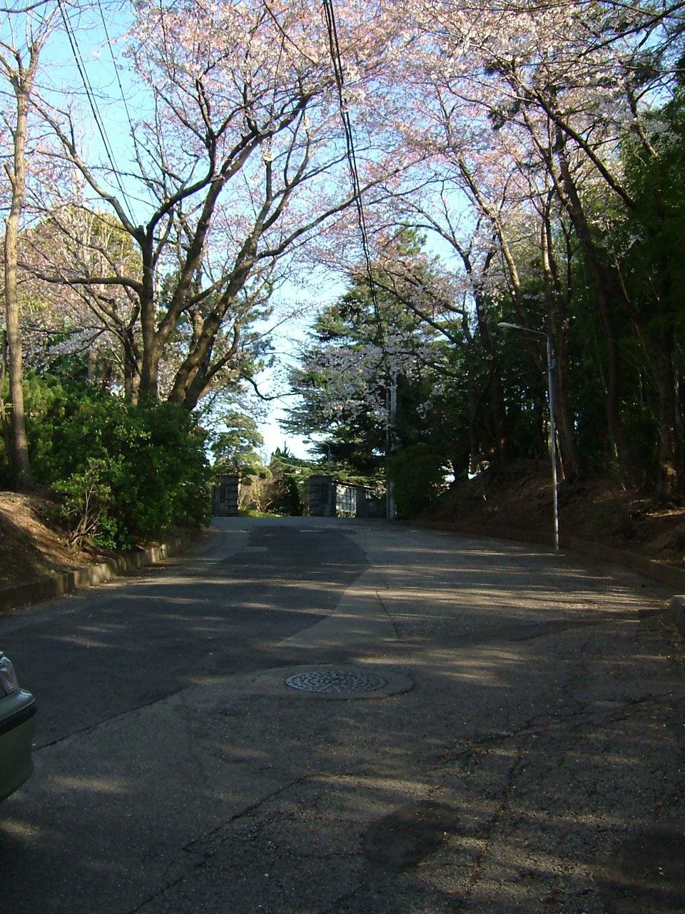 桜の下の坂道を校門に向かって登る